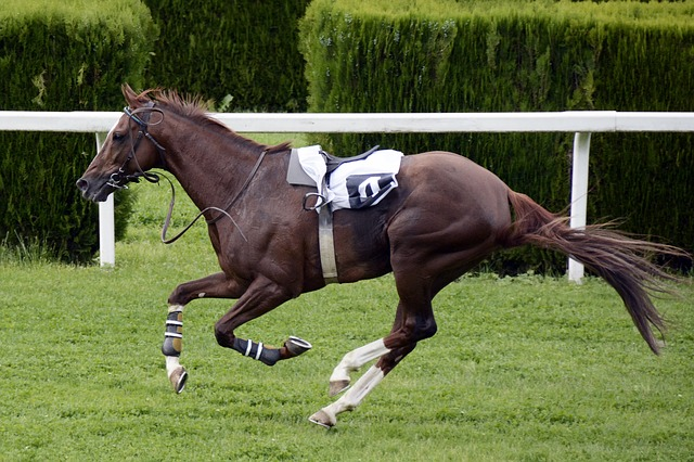 the race horse of winning bets